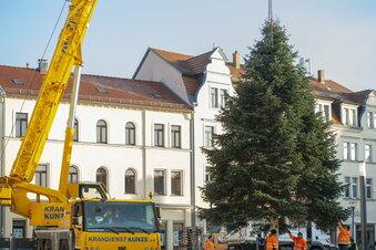 Radeburg hat seinen Weihnachtsbaum