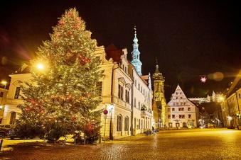 Pirna sucht 'nen Weihnachtsbaum