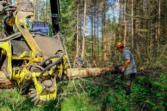 Gibt es noch Hoffnung für die Bäume?