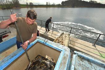Fische für die Moritzburger Teiche
