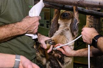 Tierischer Ultraschall im Dresdner Zoo