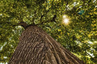 Gerichtsprozess um einen gefällten Baum