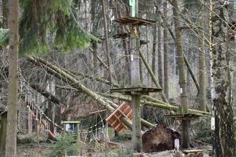 Malter: Baumfällungen im Ex-Kletterpark