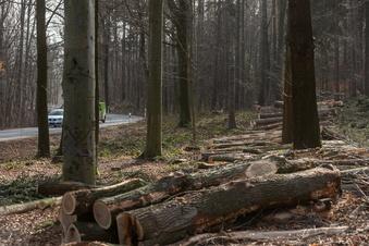 Bäume im Waldseilpark gefällt