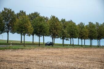 Leisnig: Mittelsachsen will Bäume fällen