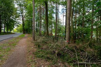 Bäume fallen an der Talsperre Malter