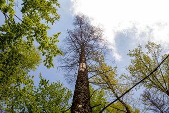 Waldwege in Graupa gesperrt