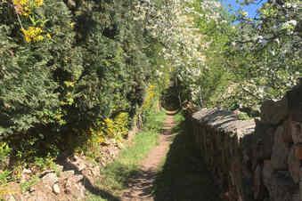 Route 11: Durch die Schönheit der Natur wandeln