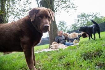 Hundebabys toben miteinander in Zentendorf