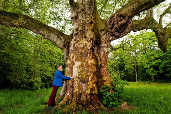 Wie sich Sachsens Bäume selbst retten
