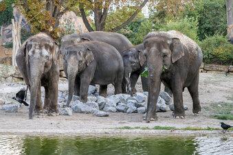Berliner Elefanten in Leipzig angekommen