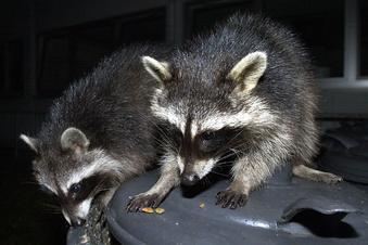 Wildtiere sorgen für Müllplage in Löbau