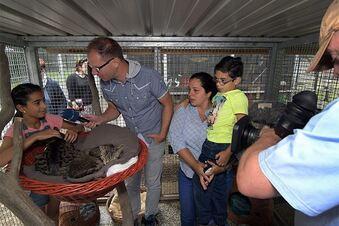 Irakische Familie kämpft um ihre Katzen