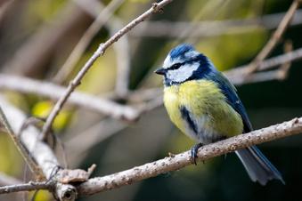 So wird der Garten vogelfreundlich