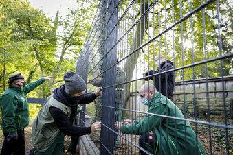 Görlitzer Tierpark macht dicht