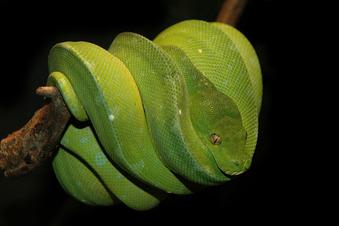 3-Meter-Schlange ausgebrochen