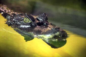Neustart bei den Reptilienfreunden