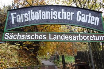 Tharandter Forstpark ist neuer Trauungsort