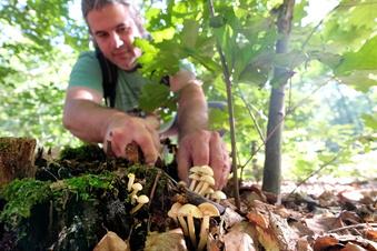 Ein besonders artenreiches und üppiges Pilzjahr