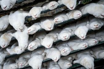 Tierschützer: Anzeige wegen Nerz-Tötung