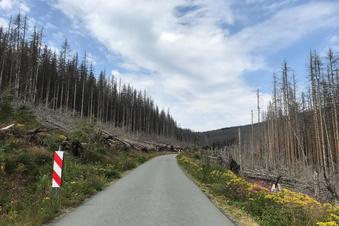 Totholz und Tourismus: So läuft's im Harz