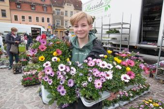 Blumenhändler machen den Frühling bunt