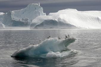 """Grönland – """"Ground Zero"""" des Klimawandels"""