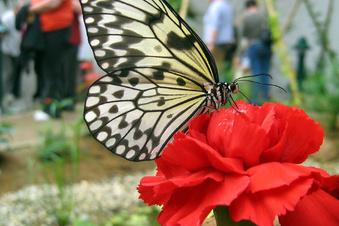 Große Pläne fürs Schmetterlingshaus