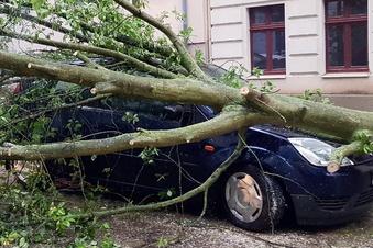 Ist Straßenbaupfusch Grund für Baumstürze?