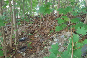 Ein Dschungel mitten in Zittau