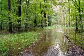Ist der Wegebau im Wald bei Großenhain illegal?