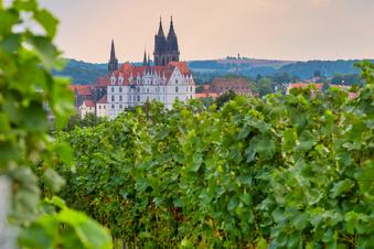 Die besten Weine aus der Region