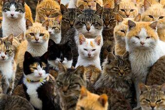 50 Katzen gehortet