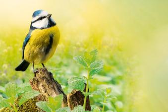So wird Ihr Garten zum Lieblingsort für Vögel