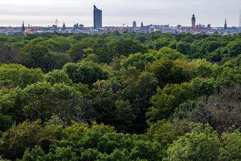 Leipzigs Stadtwald verdurstet