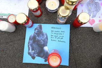 Zoo-Brand: Polizist erschoss Gorilla