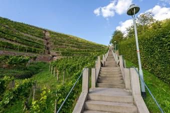 Sachsenwein wird neu definiert