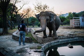 """Hilfe für den """"einsamsten Elefanten"""""""
