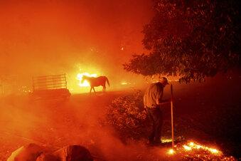 Vier Tote bei Waldbränden in Kalifornien
