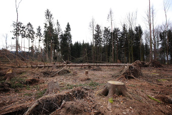 Der Kamenzer Wald steckt in der Krise