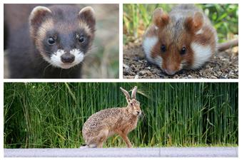 Diese Tiere sind in Deutschland gefährdet