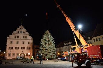 Dipps hat seinen Weihnachtsbaum