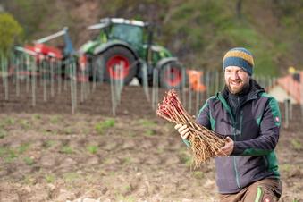 Wackerbarth pflanzt französischen Rotwein