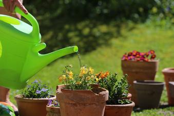 Wie gießt man den Garten effizienter?