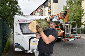 Sturm kippt Bäume in Dresden um