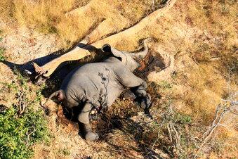 Mysteriöses Elefantensterben geht weiter