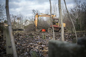 Bäume fallen für neues Wohngebiet