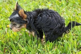 Hilfe, mein Hund frisst Ekelzeug