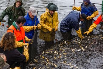 Zwischen Naturschutz und Fischzucht