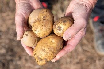 Sachsens Bauern sehen Ernte dauerhaft schrumpfen